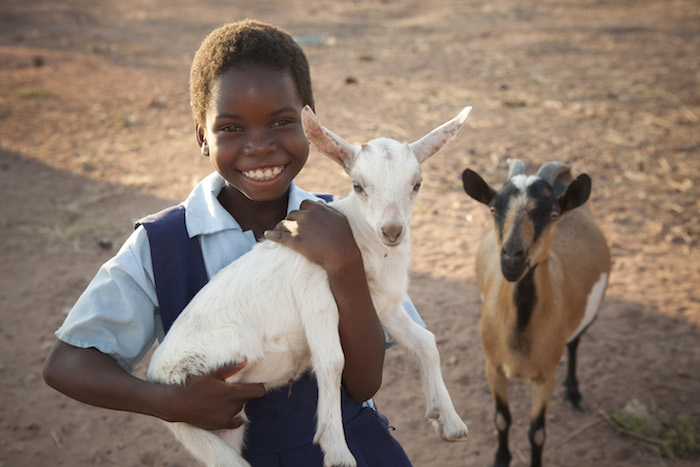 GIve a gift of a farmyard friend in Kenya