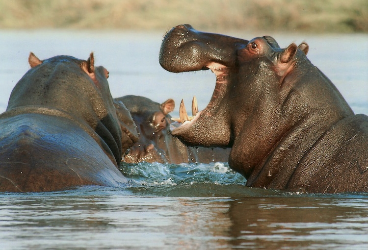 Mozambique Wildlife