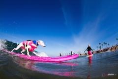 SurfCitySurfDog1