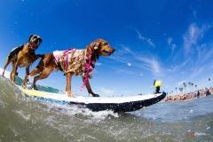 SurfCitySurfDog10