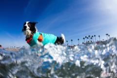 SurfCitySurfDog4