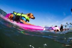 SurfCitySurfDog5
