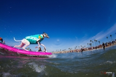SurfCitySurfDog6