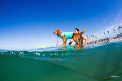 SurfCitySurfDog7