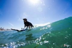 SurfCitySurfDog9