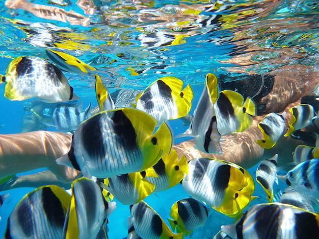 Bora Bora, Snorkeling, PC: Nicole Noel