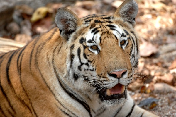 AndBeyond_Tiger Pench India