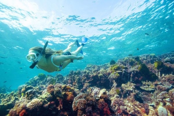 Snorkelling Lord Howe Island