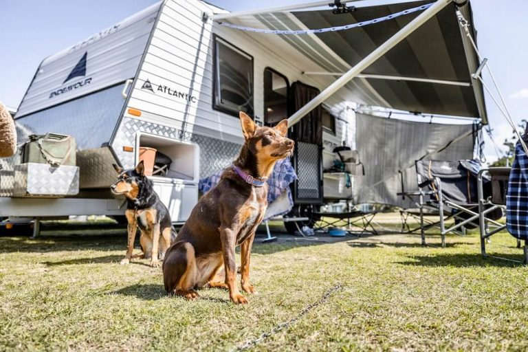 Reflections Holiday Parks calling for dogs to holiday outdoors not indoors.